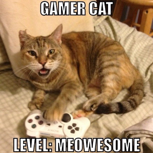 Erik's cat haha  #meme  #cat  #catmeme  #meowesome  #lolcat  www.anilols.co.uk for more funny animals #cats