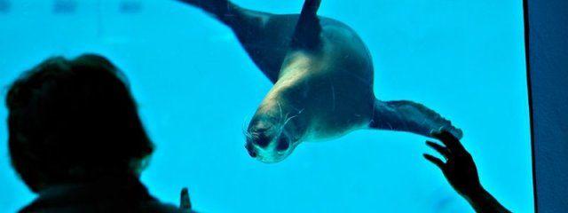 Mystic Aquarium Simply Connecticut Pinterest