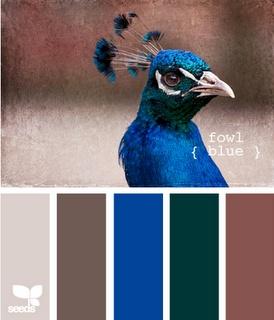 brown peacock color palette