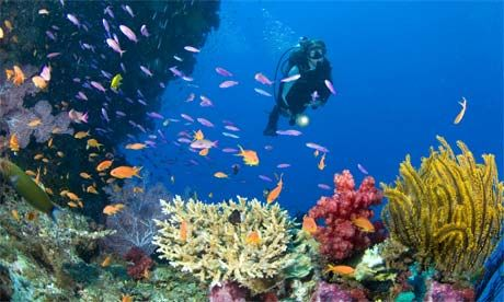 Scuba diving is on the bucket list.
