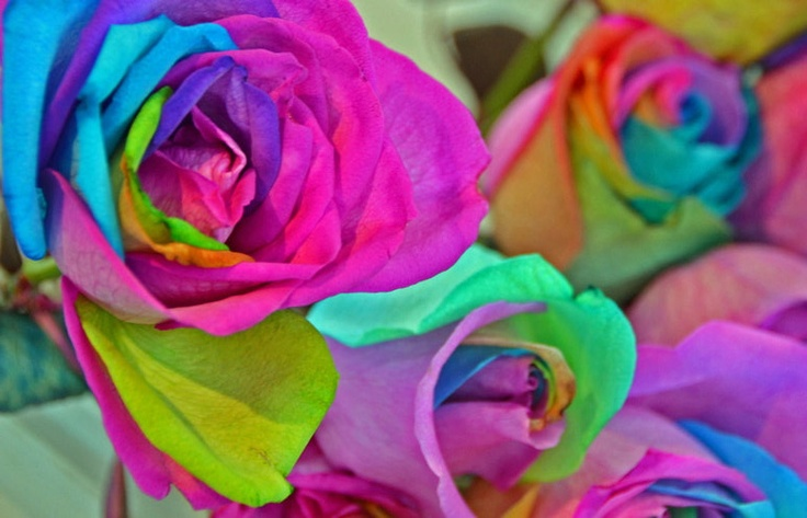 Rainbow roses flowers gardens pinterest for Where to find rainbow roses