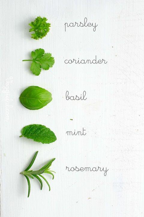 Herb Identification Plants Pinterest