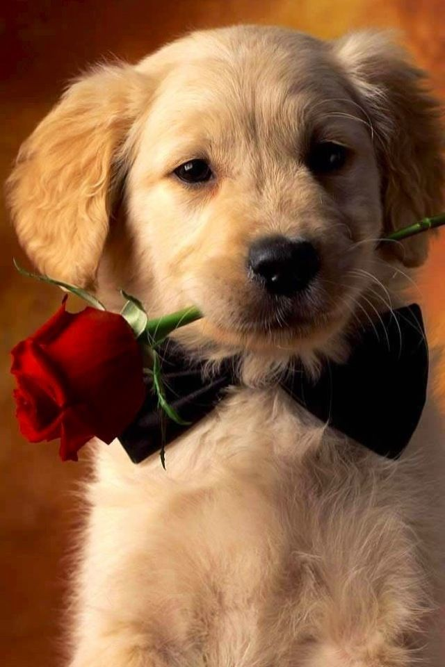 valentine's day dog images