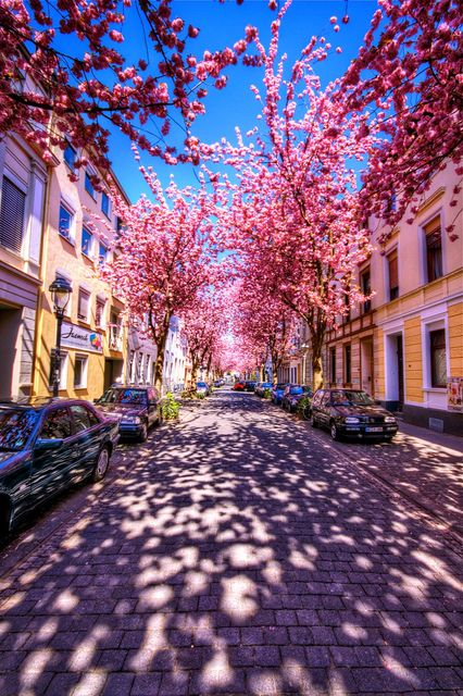Cherry Brick Road, Bonn, Germany.  www.lonelyplanet....    # Pinterest++ for iPad #