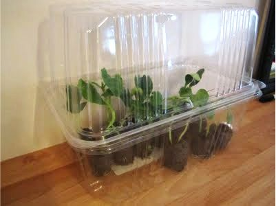 How to make a thrifty diy green house gardening pinterest for How to make a small indoor greenhouse