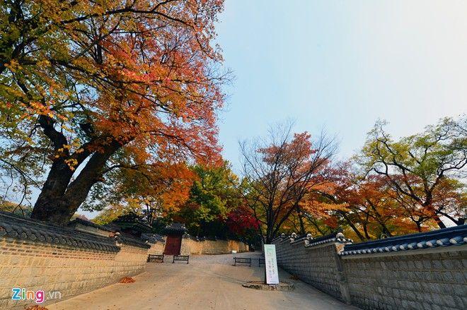 Cảnh sắc cung điện Chang Deok Gung là tuyệt mỹ nhất vào mùa thu tại Hàn Quốc