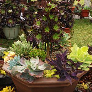 Succulent Container Garden Garden Ideas Pinterest