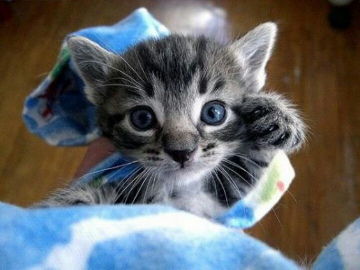Pick me up? | Cats and other cute fuzzy things | Pinterest