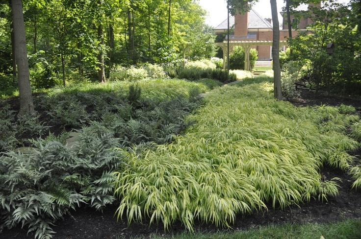 Shade garden japanese forest grass ferns plant for Plants found in japanese gardens
