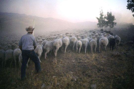 Basque herder, Lamb Stew