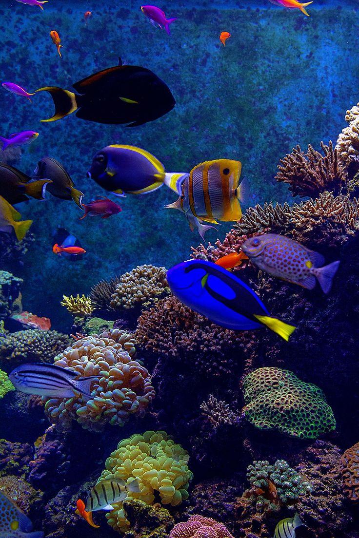 Sea creatures at sea singapore aquarium under the sea for Fish under the sea