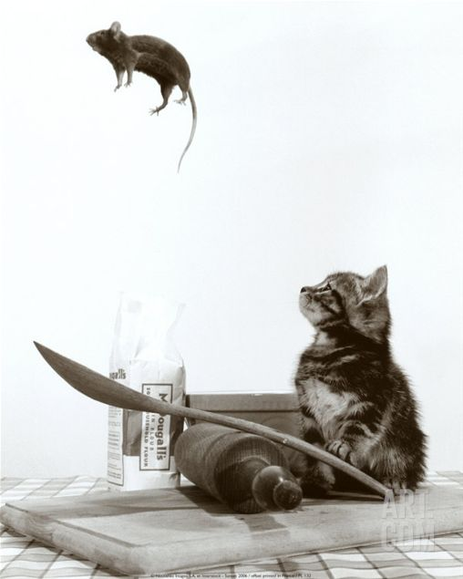 Cat and flying mouse.