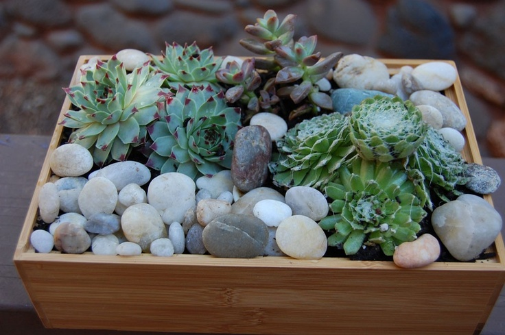 indoor succulent garden in bamboo tray