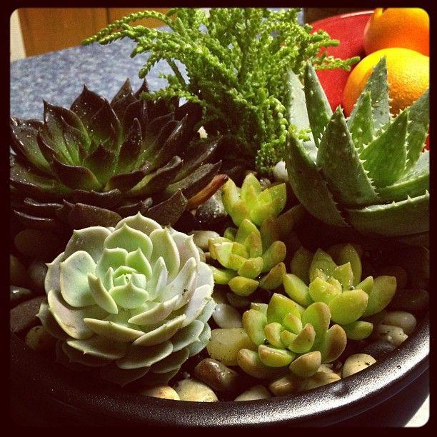 dish garden Succulents Pinterest