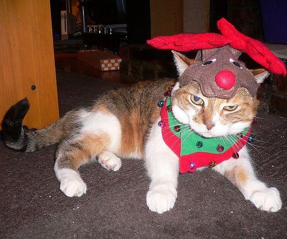 reindeer cat   It's a Purr-fect Christmas...   Pinterest