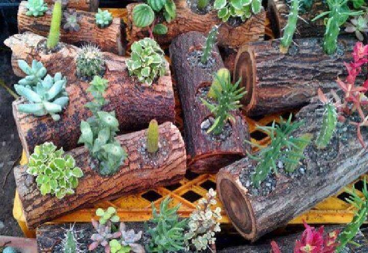 jardineria ideas para toda ocasi n pinterest
