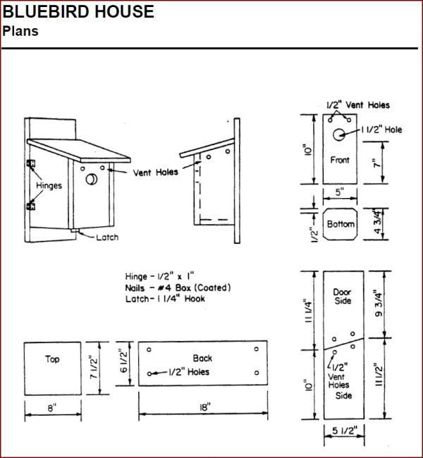 Bluebird plans garden buildings pinterest for Song bird house plans