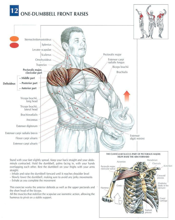 Single Dumbbell Front Raises | Shoulder Exercises | Pinterest