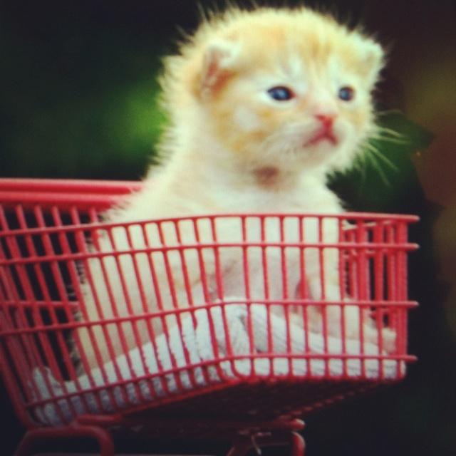 #babycat #baby #cat