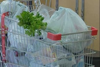 plastic bags are hazardous for the environment essay Plastic why become a physical therapist essay is light-weight, durable, plastic bags are hazardous for the environment essay low-cost, and has a wide variety of.