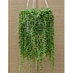 Hanging Indoor Plant Indoor Greenhouse Pinterest
