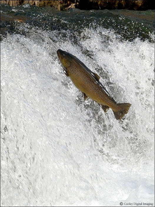 Trout fishing white river ar fishing is for the soul for White river fishing