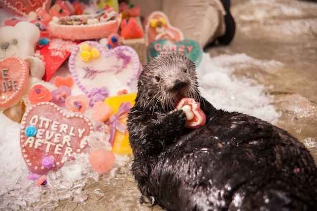 celebrating valentine's day alone
