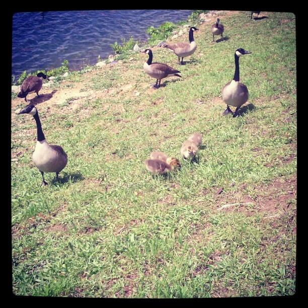 Babies localpond nature animals teamandroid instagram jovichic