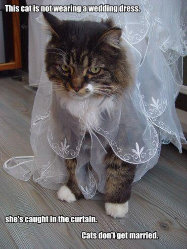 wedding cat kitty cat pinterest
