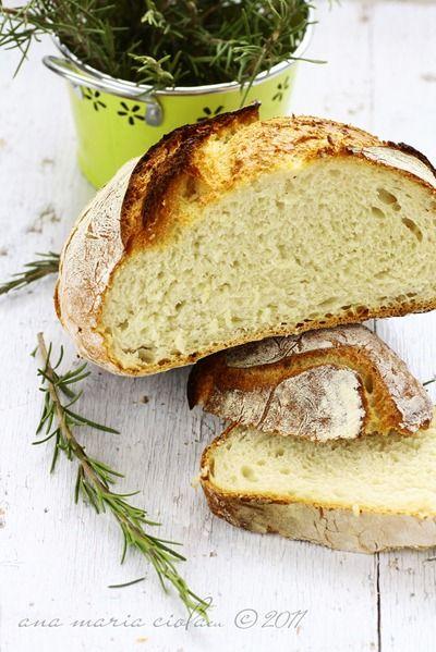 knead baguette stecca jim lahey s no knead baguette stecca no knead ...