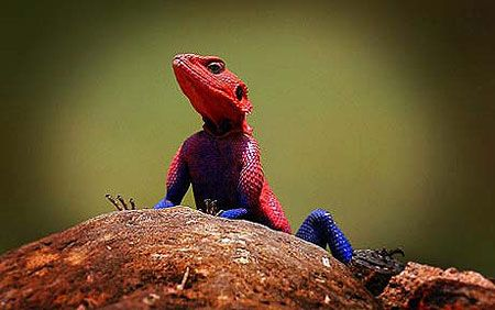 Real-Life Lizard That Looks Just Like Spider-Man