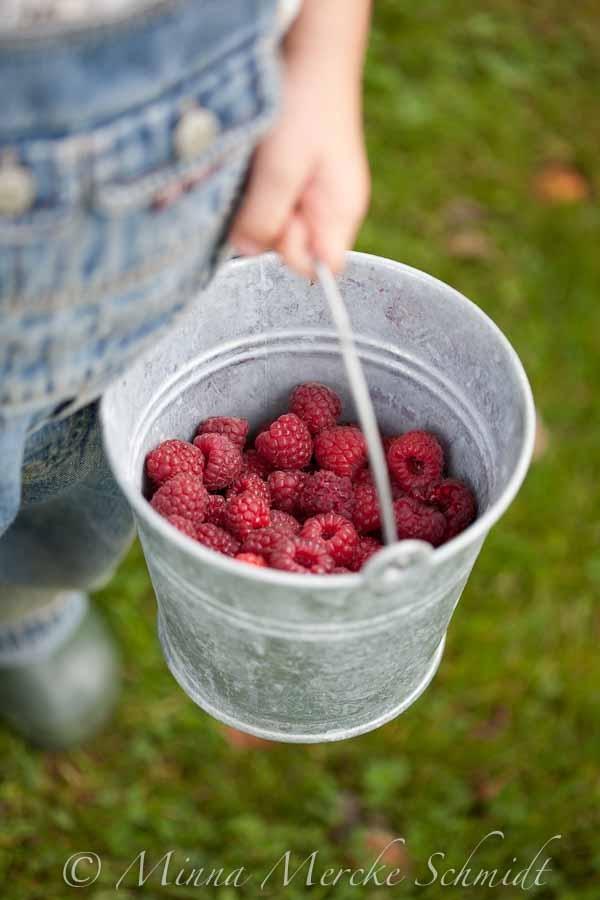 Gathering....Raspberries