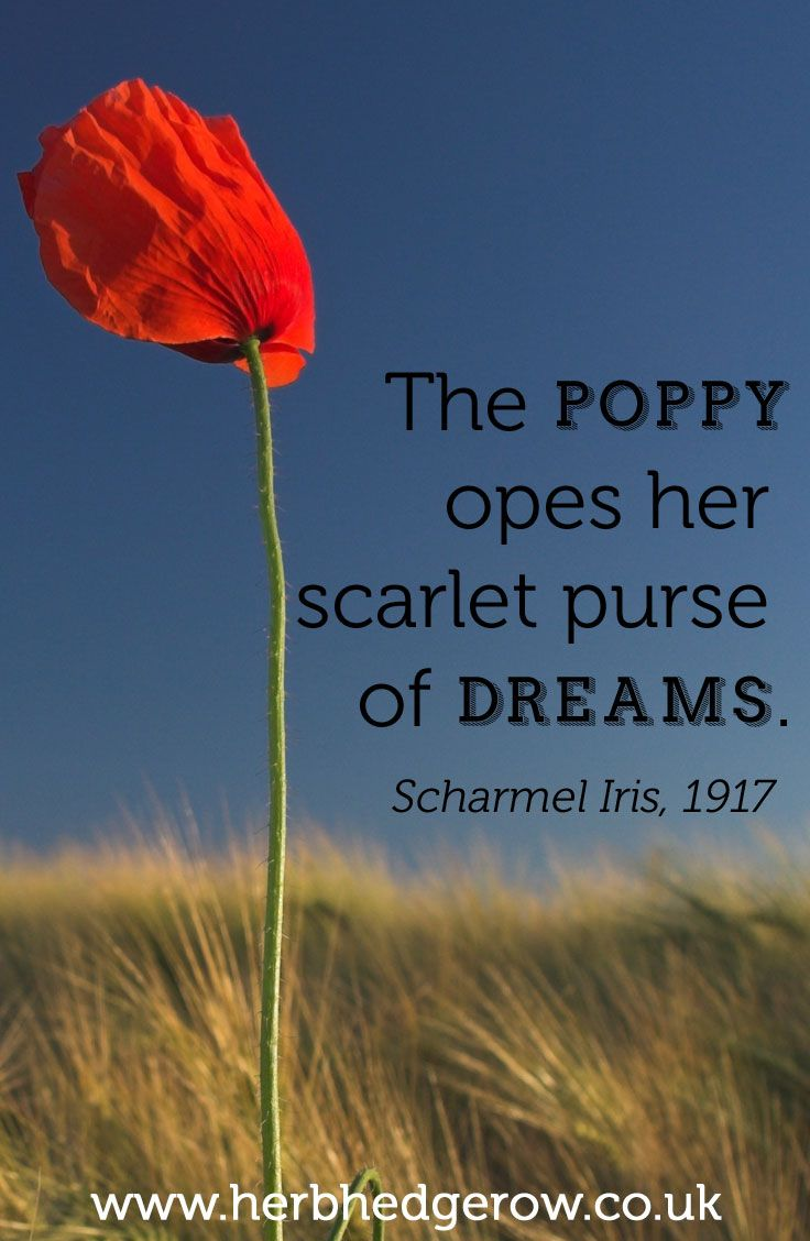 Quotes About Poppies. ...