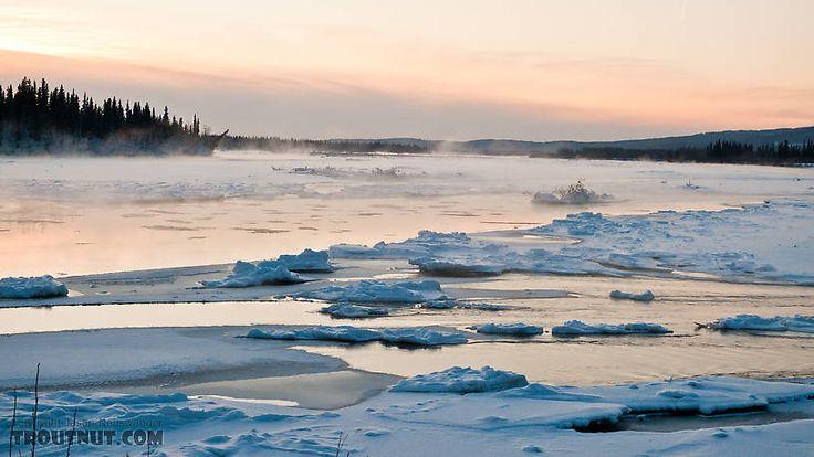 Tanana river fairbanks ak scenes for Fishing in fairbanks alaska