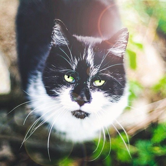 symptoms of tapeworm in cats