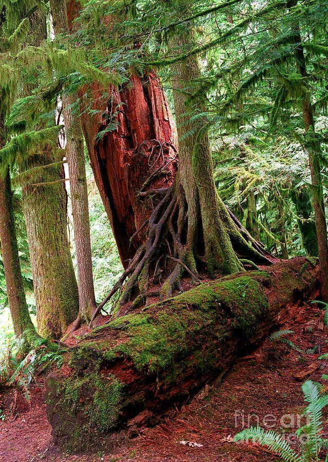 ✮ Pacific Rim National Park - Vancouver Island, Canada