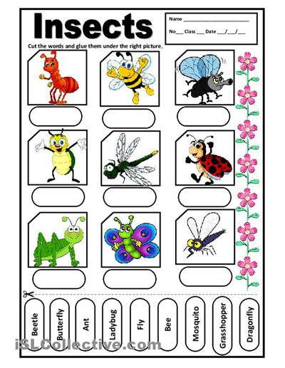 Insects For Kids Printables Crazywidowfo