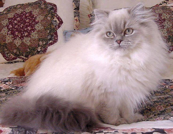 advantix ii for cats