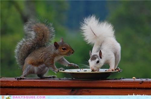 squirrel mayhem