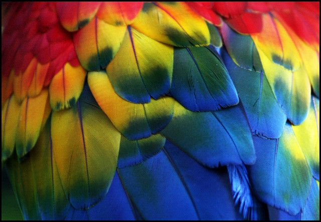 Colourful feathers by Rafa from Brazil, via Flickr