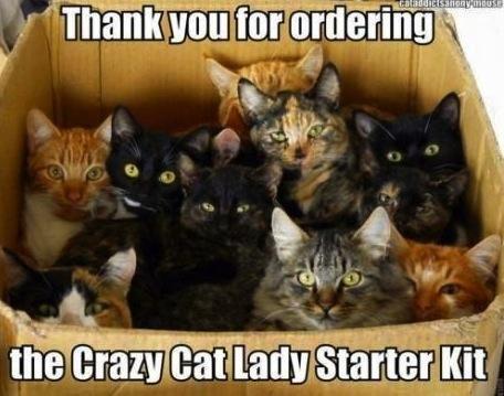 IlikeLOLsDaily : Cat lady starter kit