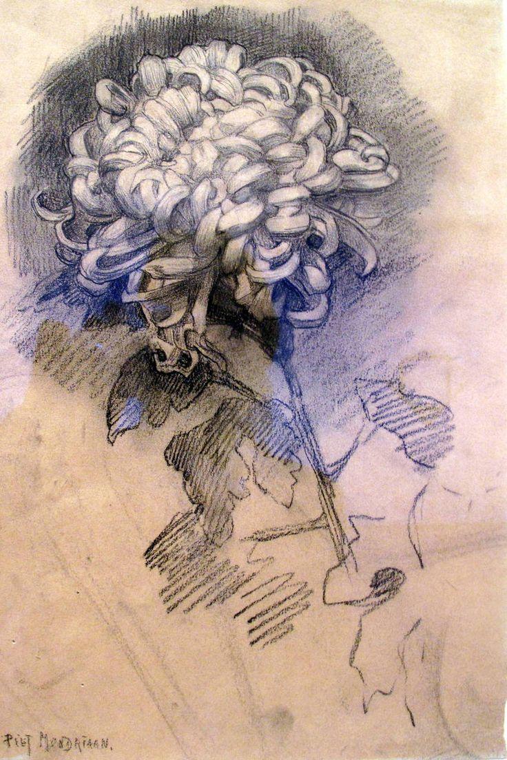 Piet Mondrian ~ Chrysanthemum, 1906 (drawing)