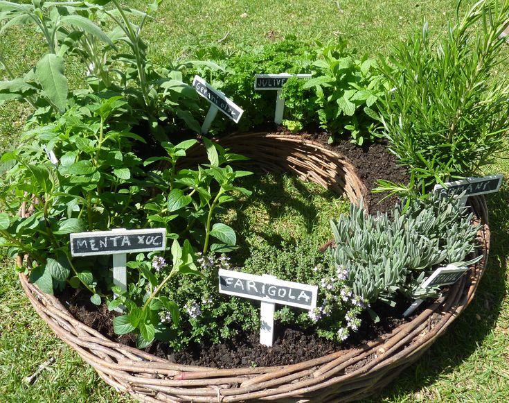 Plantas 3163 2501 plantas arom ticas for Jardinera plantas aromaticas