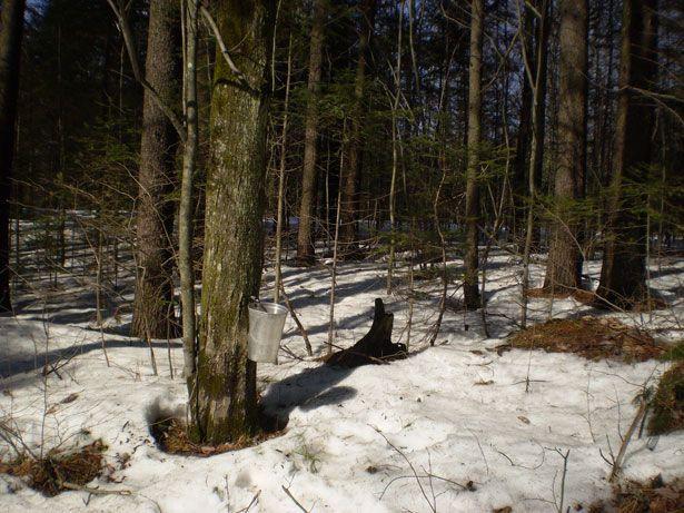 Backyard Nature Preserve : Backyard Maple Sat, February 22, 100 300 pm ? Caldwell Nature