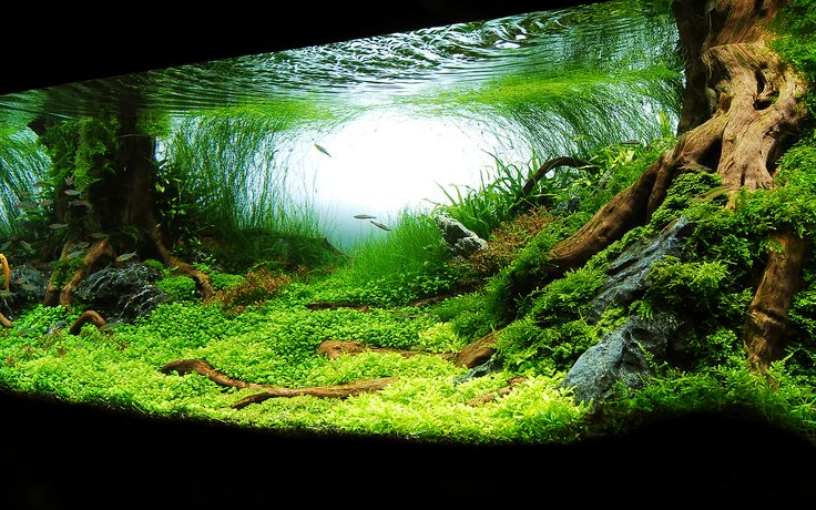 Planted aquarium: aquascape Tropical Fish & Tanks Pinterest