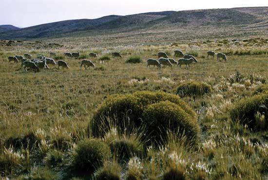 Las Pampas, Argentina
