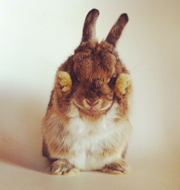 Funny bunny animals pinterest
