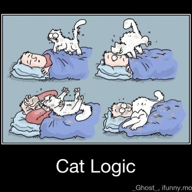 cat logic quotes   funny pinterest