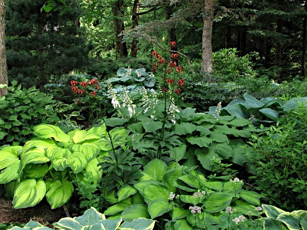 hosta planting Garden Ideas Pinterest