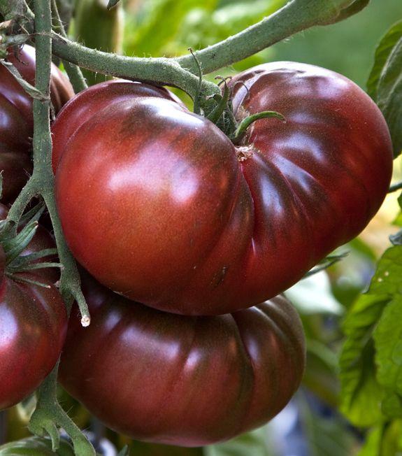 Tomates noire de crim e country living pinterest - Noir de crimee ...